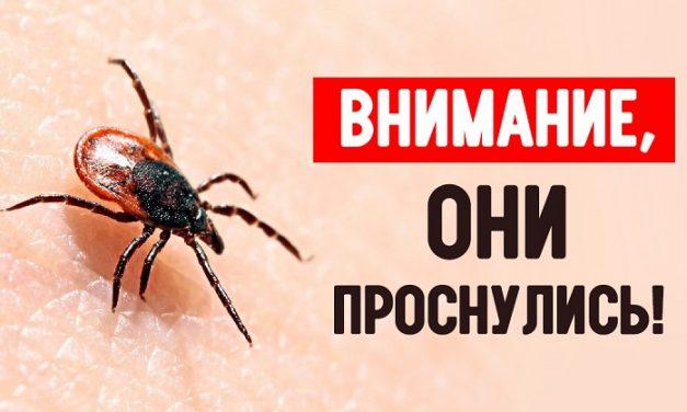 ВНИМАНИЕ КЛЕЩИ!
